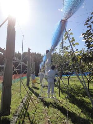 防鳥網をひとつにまとめる